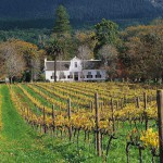 Stellenbosch Winelands & Wildlife Tour