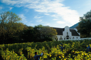 Constantia Winelands Tour