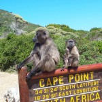 Baboons-at-Cape-Point-Photo-by-Mark-Somerville-1420x942
