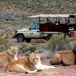 cape-town-safari-tour_01
