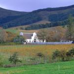 groot_constantia_vineyards
