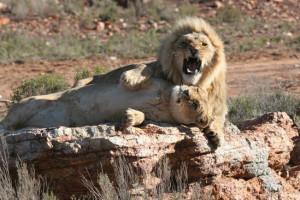 One Day Full Safari Tour
